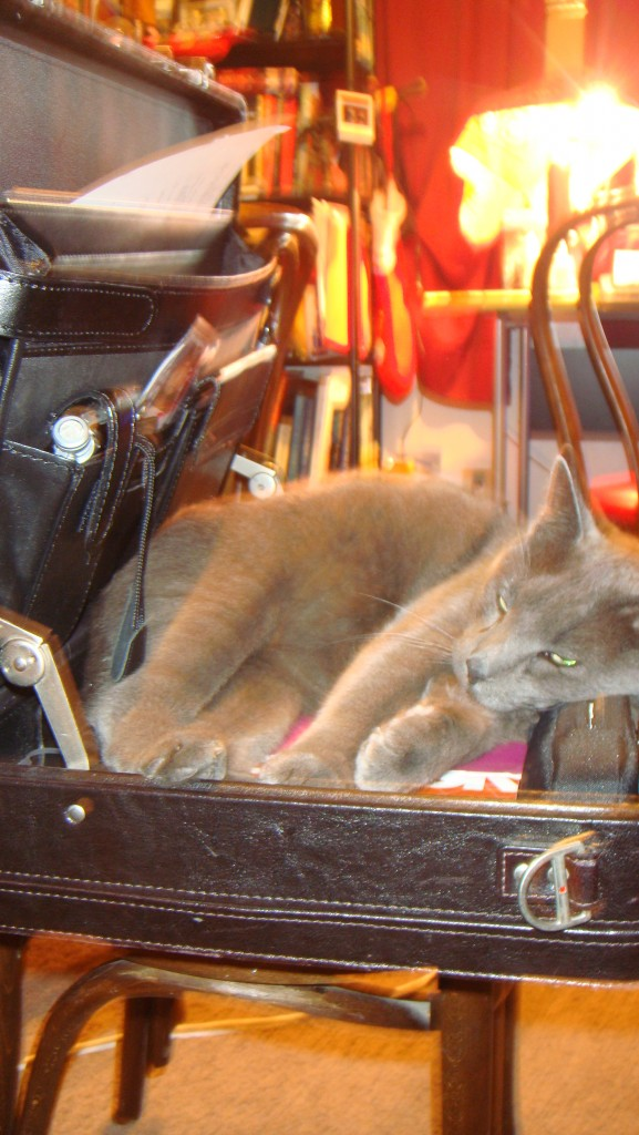 Cat in a suitcase.